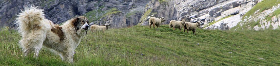 Zürcher Kantonale Schafzuchtgenossenschaft-BFS